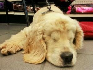Sandy having a little lie down.