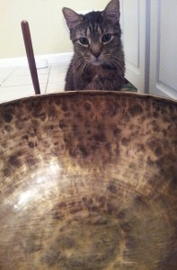 Rocky pondering the vastness of the large bowl.