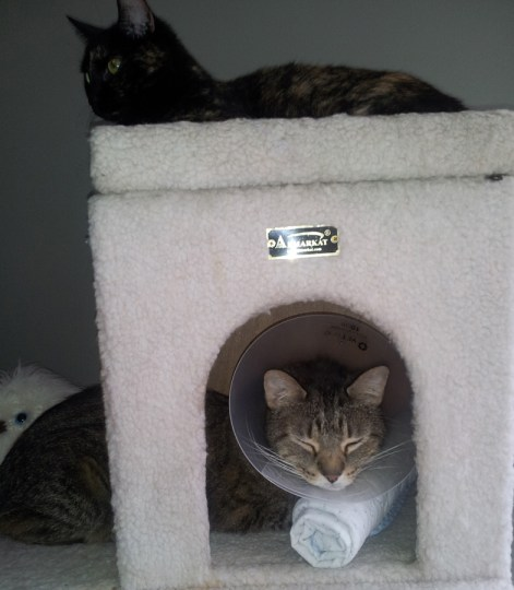 Napping in the Cone with Mrs P.