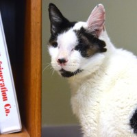 Adopting A Blind Cat: What You Need To Know
