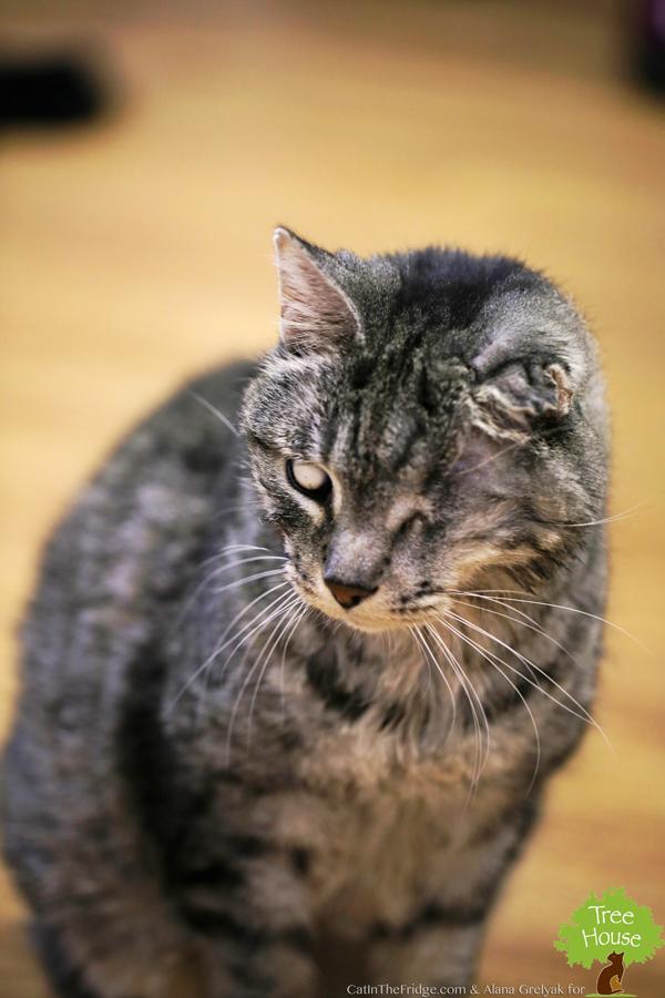 Respiratory Illnes From Cat Litter