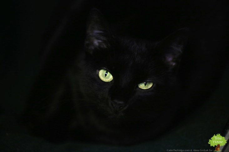 Tree House Panther, photographed using these here tips!