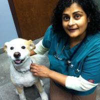 Caring For Three-Legged Pets: Muscular Imbalances