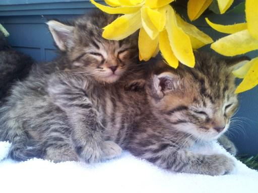 Oh look. Kittens.