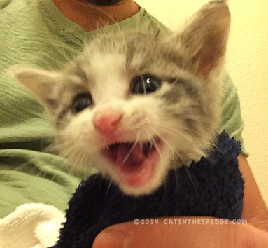 HEY! It's Kitten Season!