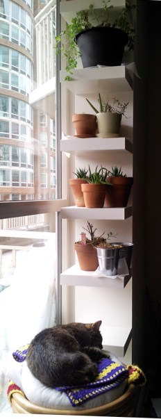 crepes sleeps below plants