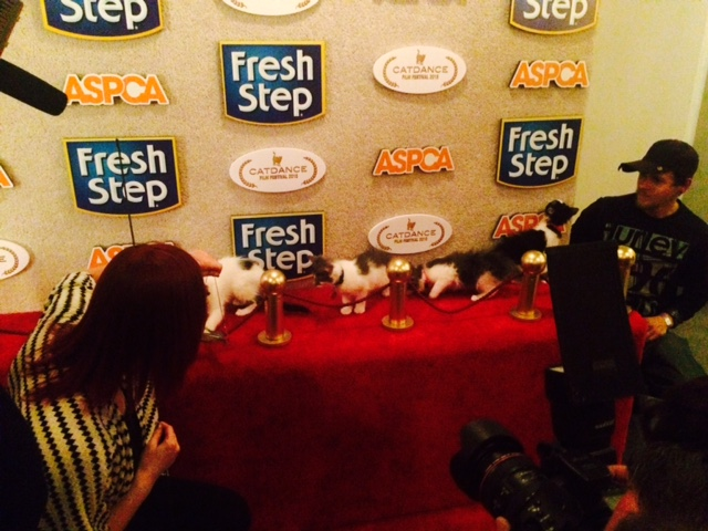 The kittens walk the red carpet.