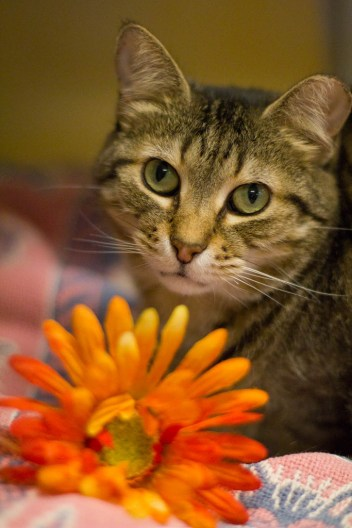 She will bring you flowers and then wait for your to sniff them.