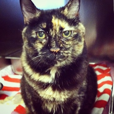 Zencada, a tortie that's out of this world.