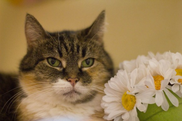 Tabitha feels NOTHING for flowers. Nothing.