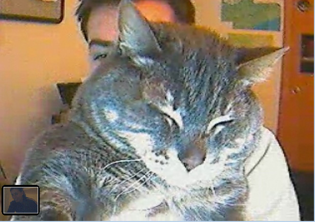 An old video call circa 2008 with Cotton and C in the background and MomFOD in a tiny little square in the corner.