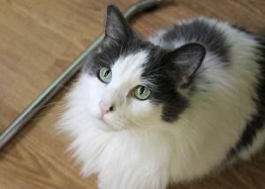 tree house cat adopt