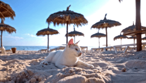 cat lounging on a beach