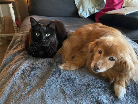 dog and cat on a blanket