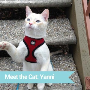 Yanni, the therapy cat