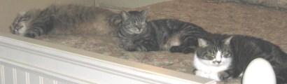 three little kittens 095