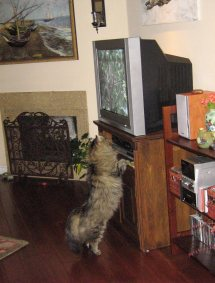 Lex and the TV 035