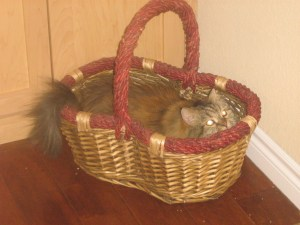 Bella in Basket