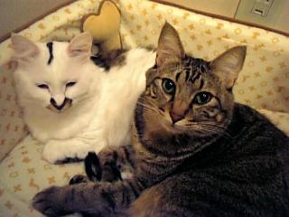 image/catlife-2005-10-26T01:56:56-1.jpg
