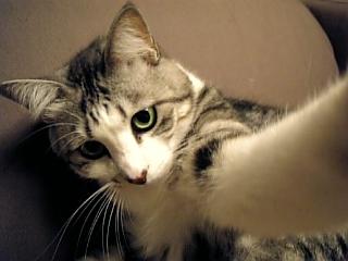 image/catlife-2005-11-08T01:52:56-1.jpg