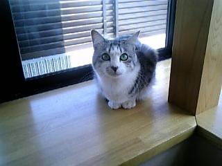 image/catlife-2006-02-10T12:29:37-1.jpg