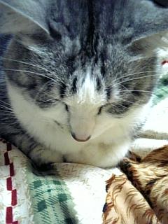 image/catlife-2006-03-17T23:47:54-1.jpg