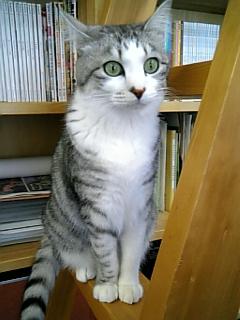 image/catlife-2006-03-24T14:14:23-1.jpg