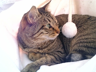 image/catlife-2006-03-25T10:47:56-1.jpg