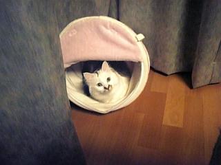 image/catlife-2006-03-25T18:48:51-1.jpg