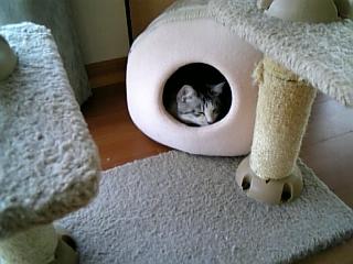 image/catlife-2006-03-30T16:06:19-1.jpg