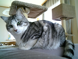 image/catlife-2006-04-14T15:13:50-1.jpg