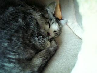 image/catlife-2006-04-18T15:43:08-1.jpg