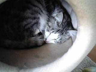 image/catlife-2006-04-21T16:48:52-1.jpg