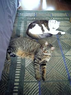 image/catlife-2006-04-23T12:06:09-1.jpg