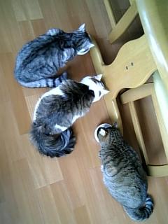 image/catlife-2006-04-27T09:45:45-1.jpg