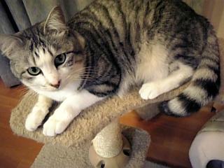 image/catlife-2006-04-28T19:48:32-1.jpg