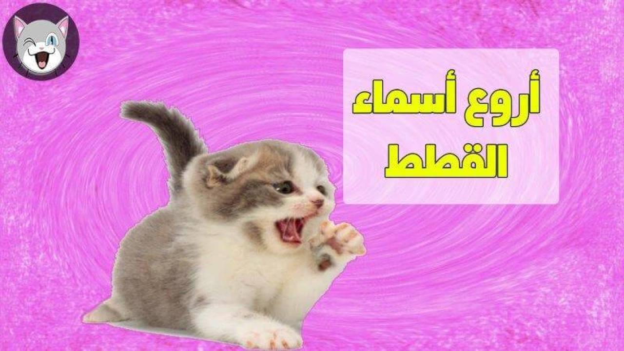 أصوات القطط ومعانيها المرسال