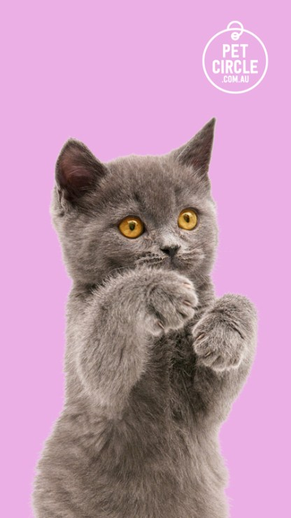 cat lovers groups