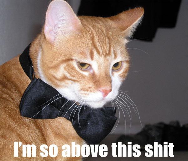 im so above this shit disdain bow tie lol cat macro