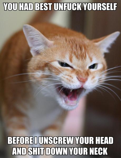 unfuck yourself full metal jacket sergeant hartman cat macro