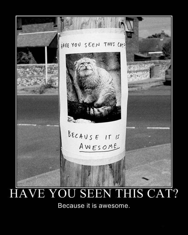 lost cat poster awesome weird strange breed lol cat macro