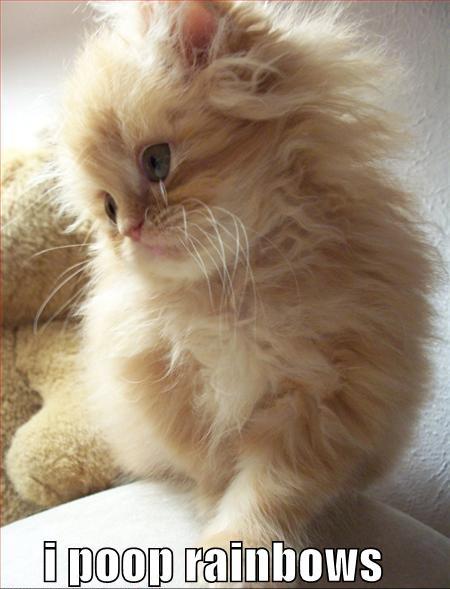 i poop rainbows kitten fluffy lol cat macro