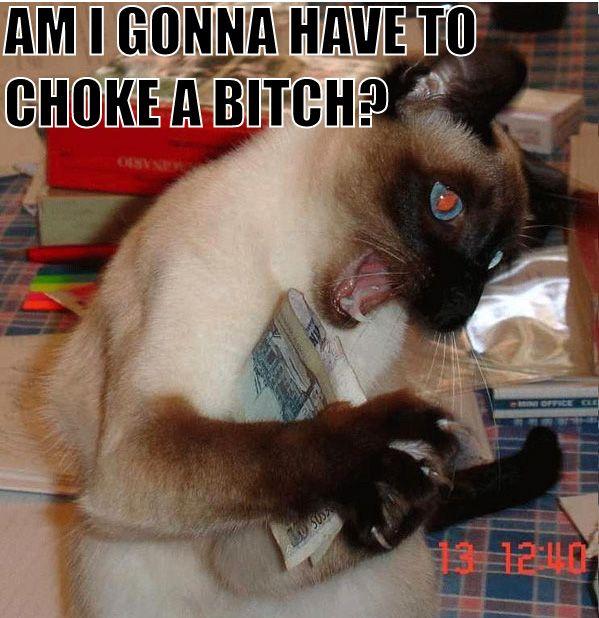 choke a bitch meme siamese claws lol cat macro