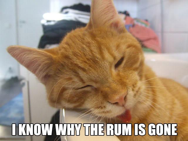 drunk booze rum all gone drinking sleeping lol cat macro
