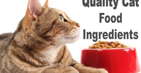Quality Cat Food Ingredients | Cat Mania