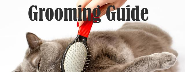 Cat Grooming | Cat Mania