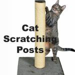 Cat Scratching Posts : Do Cat's Need Them? | Cat Mania