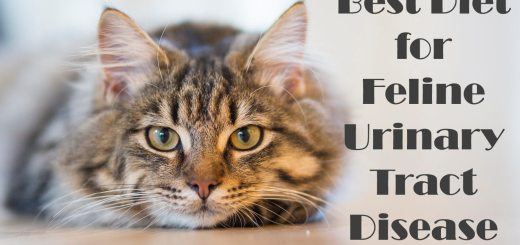 Best cat food for Urinary problems