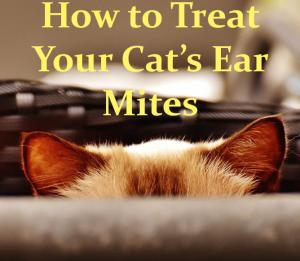 Ear Mites in Cats and Treatment