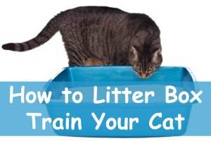 Litter Box Training : How to Get Your Cat to Use One